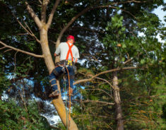 A man climbing a tree with a chainsaw and wearing cables